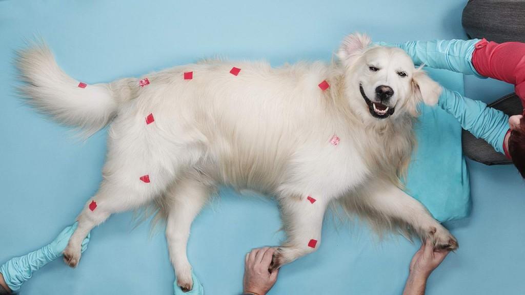 Использование скелетной 2D-анимации для создания стоп-моушен ролика с собаками