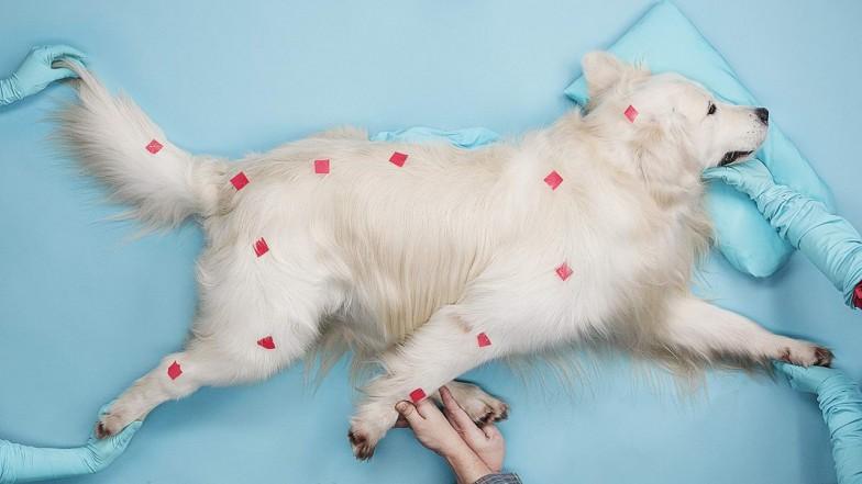 beeline-tricky-dog-anim-03
