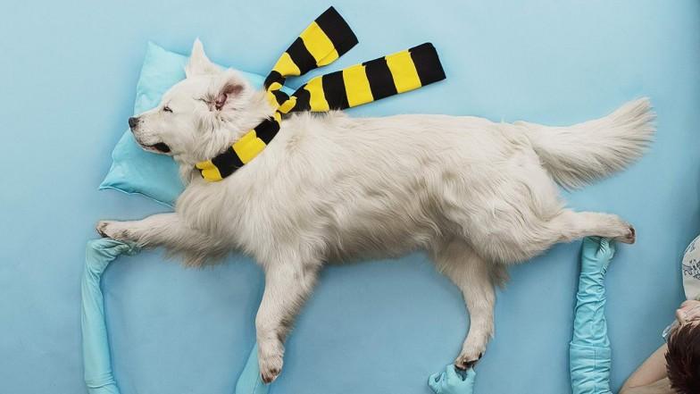 beeline-tricky-dog-mo-03