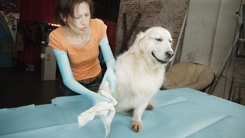 beeline-tricky-dog-mo-11