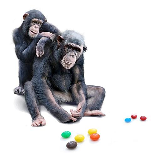 Эксперимент с обезьянами. Эмоции в рекламе | mfive